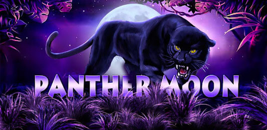 You are currently viewing Panther Moon